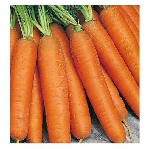 Καρότο jolana